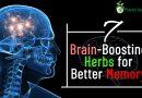 7 Brain-Boosting Herbs for Better Memory